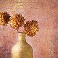 Hydrangea by Michael Petrizzo