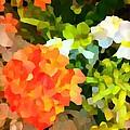 Hydrangea by Saundra Myles