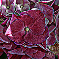 Hydrangeas In Rich Rose Color by Debbie Portwood
