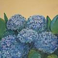 Hydrangeas by Karen Gilmore