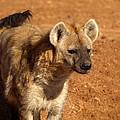 Hyena by James Peterson