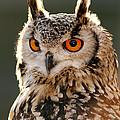Hypnoteyes  Eurasian Eagle Owl by Roeselien Raimond