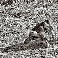 I Am Catching Up Mr Rabbit by Douglas Barnard