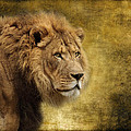 I Am The King by Wes and Dotty Weber