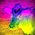 I Think I Am The Most Colorful Cow You Know  by Hilde Widerberg