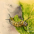 I Am Very Hungry - Monarch Caterpillar by Yoshiko Mishina