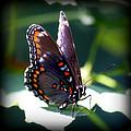 I Butterfly by Aurelio Zucco