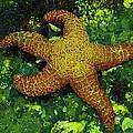 I Found A Starfish by Jeff Swan