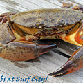 I Got Crabs At Surf City by Crissy Anderson