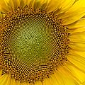 I Got Sunshine by Susan Candelario
