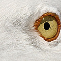 I Have My Eye On You by Marcia Colelli