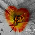 I Heart Flowers by Janice Westerberg