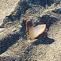 I Heart The Beach by Anna Villarreal Garbis