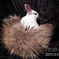I Just Love My New Tail by Renee Trenholm