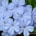 I Love Blue Flowers by Sabrina L Ryan