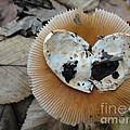 I Love Mushrooms by Ara Wilnas