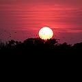 I Love Sunsets Three by Ericamaxine Price