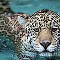 I Love The Water by Sabrina L Ryan