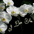 I Love You Greeting - White Moth Orchids by Mother Nature