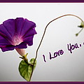 I Love You by Travis Truelove
