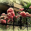 I Never Promised You A Rose Garden by Susanne Van Hulst