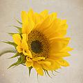 I See Sunshine by Kim Hojnacki