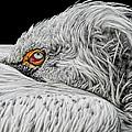 I See You by Joachim G Pinkawa