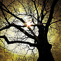 I Think I Shall Never See A Poem As Lovely As A Tree... by Natasha Marco