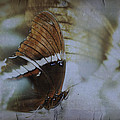 I Wish I Had Wings by Eduardo Tavares