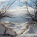 Ice Between The Trees by Linda Kerkau
