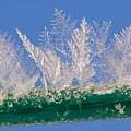Ice by Carol Lynch