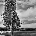 Ice Coated Tree by Louise Heusinkveld