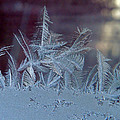 Ice Crystals Of Winter by Nancy Griswold