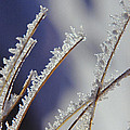 Ice Crystals On Fireweed Fairbanks  Alaska By Pat Hathaway 1969 by California Views Archives Mr Pat Hathaway Archives