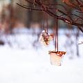 Ice Decorations IIi by Mary  Smyth