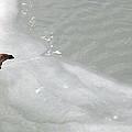 Ice Goose by Joyce  Wasser