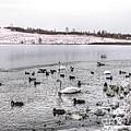 Ice Lake by Yury Bashkin