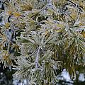 Ice Needles by Scott Angus