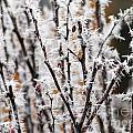 Ice On Thornes by Ulli Karner