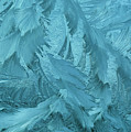 Ice Patterns Formed On Glass by Nicola M Mora