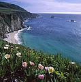 Ice Plants On Big Sur Coast by Tim Fitzharris