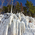 Ice Roots by Kelly Nechuta