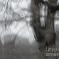 Ice Storm Abstraction by Laura Yamada