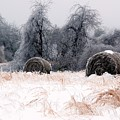 Ice Storm And Hay Bales In The Blue Rdige Mountains by John Harmon