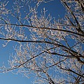 Ice Storm Branches by Michelle Miron-Rebbe