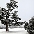 Ice Storm Scenery by Sophie Vigneault