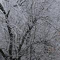 Ice Storm by Scott Angus