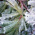 Ice Storm by Shana Rowe Jackson