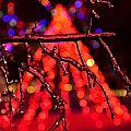 Ice Tree 2 by Jeffrey J Nagy