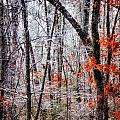 Ice Trees by Daniel George